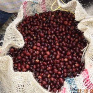 Castillo Coffee Beans(Raw)